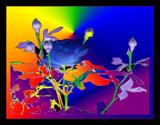 Colour Bursts !! by verenabloo, Photography->Manipulation gallery
