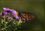 Calendar Delight_Sweet Attraction #2 by tigger3, photography->butterflies gallery