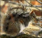 Nut Thief by trixxie17, photography->animals gallery