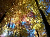 Fall's Sparkling Light by wencele, Photography->Nature gallery
