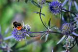Busy Bee by braces, Photography->Insects/Spiders gallery