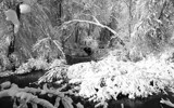 Woodland River Snow by Tomeast, contests->b/w challenge gallery