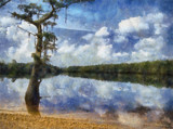 Cypress Lake by allisontaylor, photography->manipulation gallery