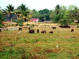 My beautiful village-3 by sahadk, Photography->Landscape gallery
