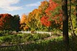 Rose Garden by Silvanus, photography->gardens gallery