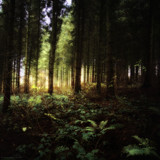 Sunlight through the trees by coram9, photography->landscape gallery