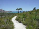 Norman Bay trail by postaldude66, Photography->Landscape gallery