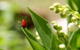 Red Bug by Tomeast, photography->insects/spiders gallery