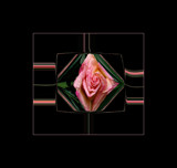 Simple Rose Meltdown by verenabloo, Photography->Manipulation gallery