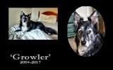 Growler by JaiJoli, photography->animals gallery