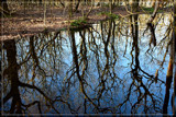 Mirror 1 by corngrowth, photography->nature gallery