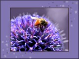 Desktop Buzz 2 by LynEve, photography->insects/spiders gallery