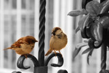 They are talking by sanaz80, photography->birds gallery