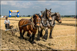 Ploughing Competition 02 by corngrowth, photography->animals gallery