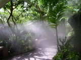 Rainforest Path by softie, Photography->Landscape gallery