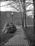 B&W Walk by amishy, photography->landscape gallery