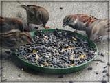 Feeding Frenzy by trixxie17, photography->birds gallery