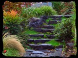 Rain Soaked Stairway by verenabloo, Photography->Landscape gallery