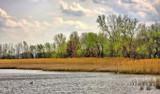 Riverside Silhouette  2 by Jimbobedsel, Photography->Landscape gallery