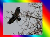 Lift Off by dwdharvey, Photography->Birds gallery