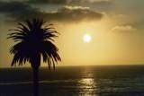 Lone Palm by asherdarkness, Photography->Landscape gallery