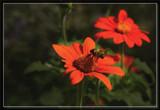 Zoo Bee Doo Bee Doo by Jimbobedsel, Photography->Flowers gallery