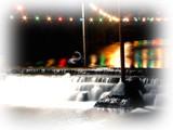 Festive Black Swan by Cartman2k3, Photography->Landscape gallery