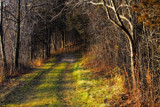 Enter the Darkling Woods by Silvanus, photography->landscape gallery