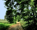 Green Path by Tedi, photography->landscape gallery