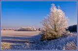Wint'ry Scene by corngrowth, Photography->Landscape gallery