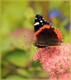 The Flutterby, And The Foofy by tigger3, photography->butterflies gallery