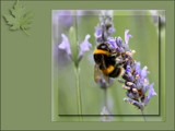 Desktop Buzz by LynEve, Photography->Nature gallery