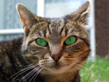 Bright eyed and bushy tailed by the_runcorn_womble, Photography->Pets gallery
