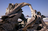 a driftwood frame by jeenie11, Photography->Shorelines gallery