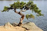 Serenity Tree by BrandyAdams77, Photography->Shorelines gallery