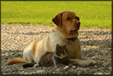 Best Of Friends by tigger3, Photography->Pets gallery