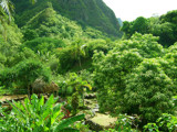 Green Valley by indian, Photography->Gardens gallery