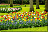 Keukenhof 14 by corngrowth, photography->gardens gallery