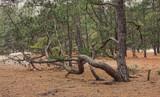 Wacky Tree by Jimbobedsel, photography->nature gallery