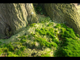 Mossy Roots by imbusion, Photography->Landscape gallery
