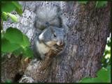 Tree Hugger by ironjoe, Photography->Animals gallery