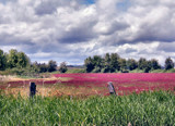 Walk with me thru Crimson Clover by verenabloo, Photography->Landscape gallery