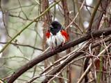 A Nice Contrast (Rework) by brandondockery, photography->birds gallery
