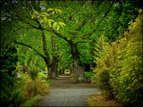 Avenue by LynEve, photography->gardens gallery
