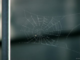 a wittle web by slushie, photography->insects/spiders gallery