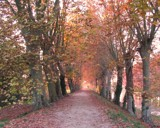 Alley of Autumn by Cyspak, photography->landscape gallery