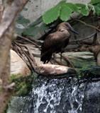 Quietude by Pistos, photography->birds gallery