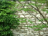 Spring Wall and Foliage by jojomercury, photography->architecture gallery