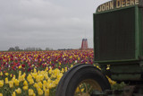 John Deer and the tulips by auroraobers, photography->flowers gallery