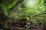 bamboo waterfall by bOdell, photography->waterfalls gallery
